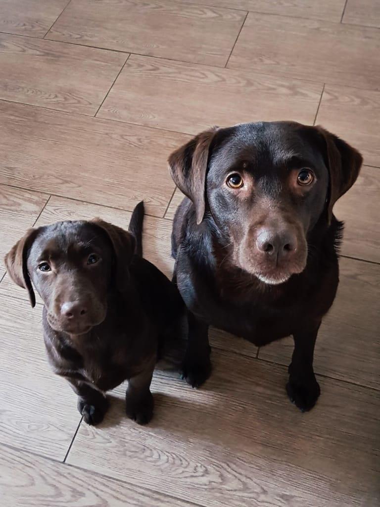 Hunde Foto: Sabrina und Liese & Mia - Beste Freunde