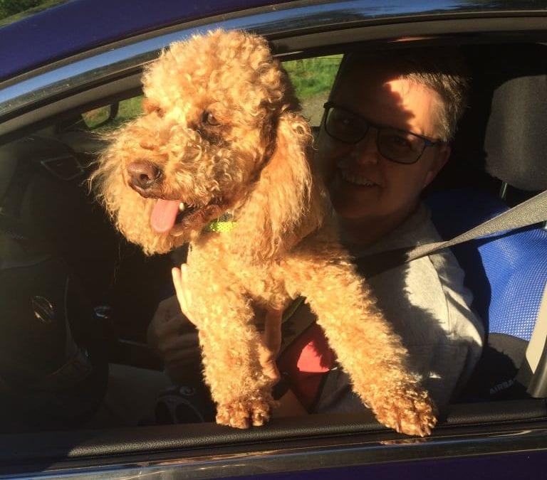 Hunde Foto: Petra und Krümel – Die Sonne ist da 😃