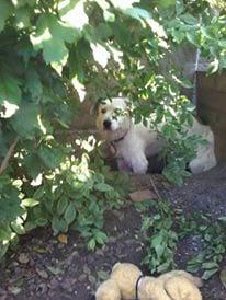 Hunde Foto: Doris und Whity - Bei der Gartenarbeit