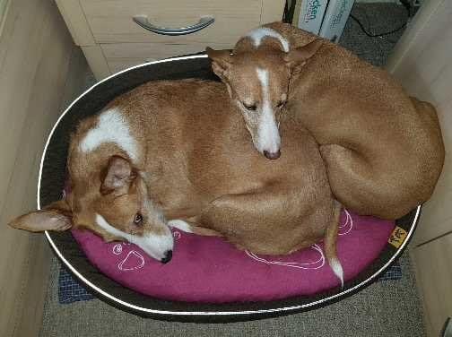 Hunde Foto: Natascha und Juli & Jane - Best Friends!