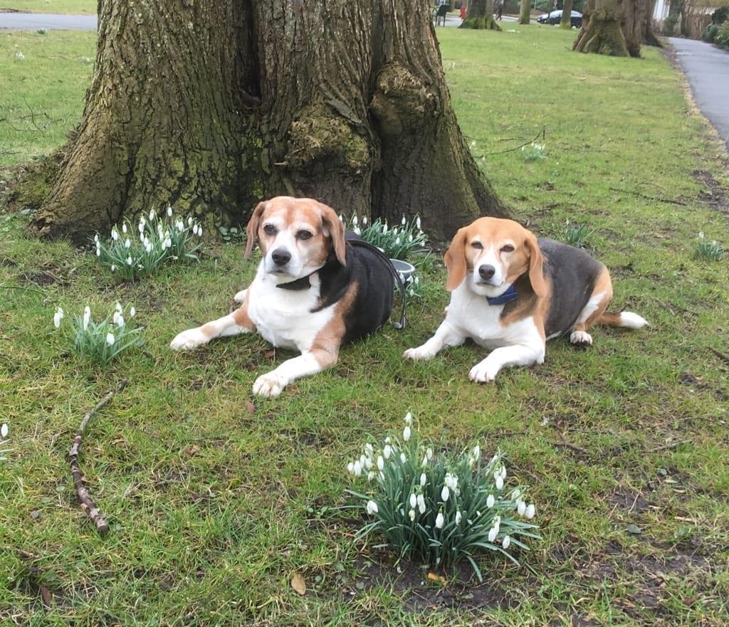 Hunde Foto: Roswitha und Lisa & Shary - Frühling