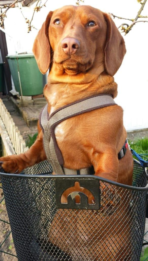 Hunde Foto: Helmut und Sally - Ab zum einkaufen