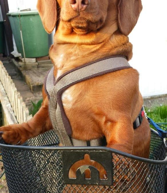 Hunde Foto: Helmut und Sally – Ab zum einkaufen