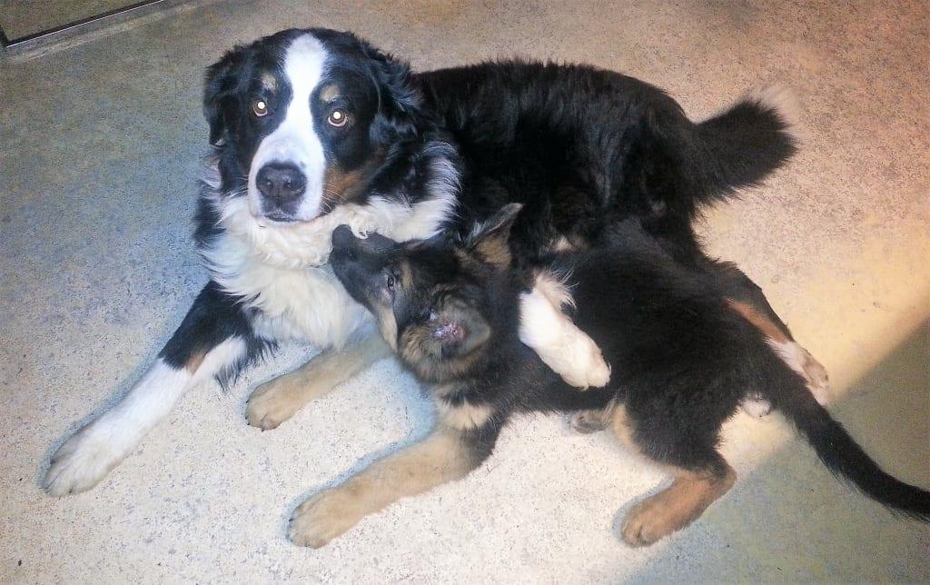"""Hunde Foto: Patricia und Rocky und Klein-Hasko - Fass meinen kleinen """"Bruder"""" nicht an...."""