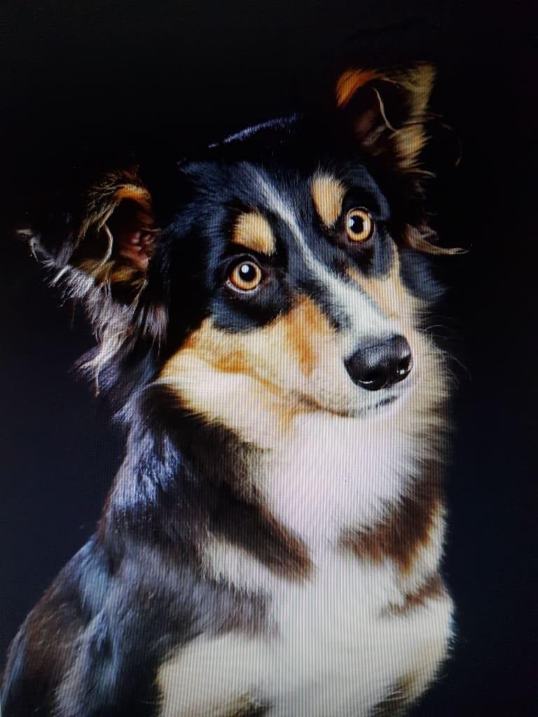 Hunde Foto: colette und Luna - Nervenbündel aber zum knuddeln unser Schatz