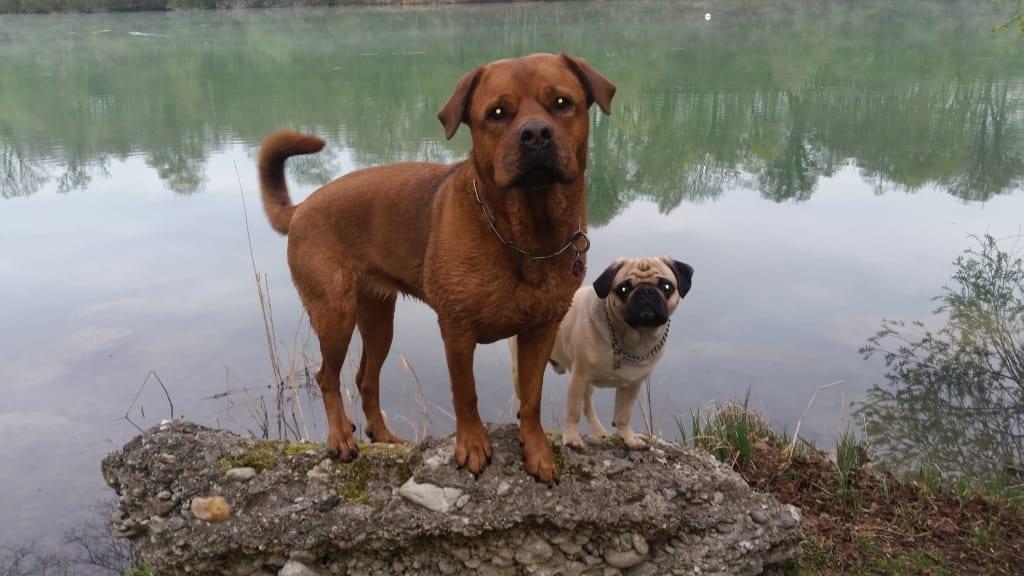 Hunde Foto: Petra und Ebby und Teddy - Zwei Molossertypen