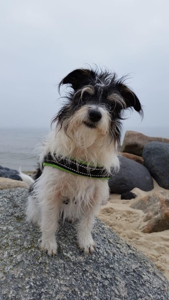Hunde Foto: Anja und Mini - Strandurlaub