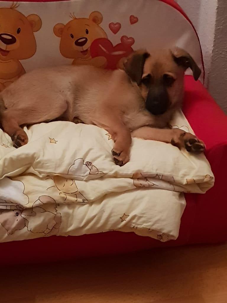 Hunde Foto: Alexandra und Fluffy - Immer den bequemsten Platz wählen!