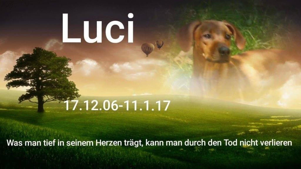 Hunde Foto: Daniela und Luci – Im Herzen Luci