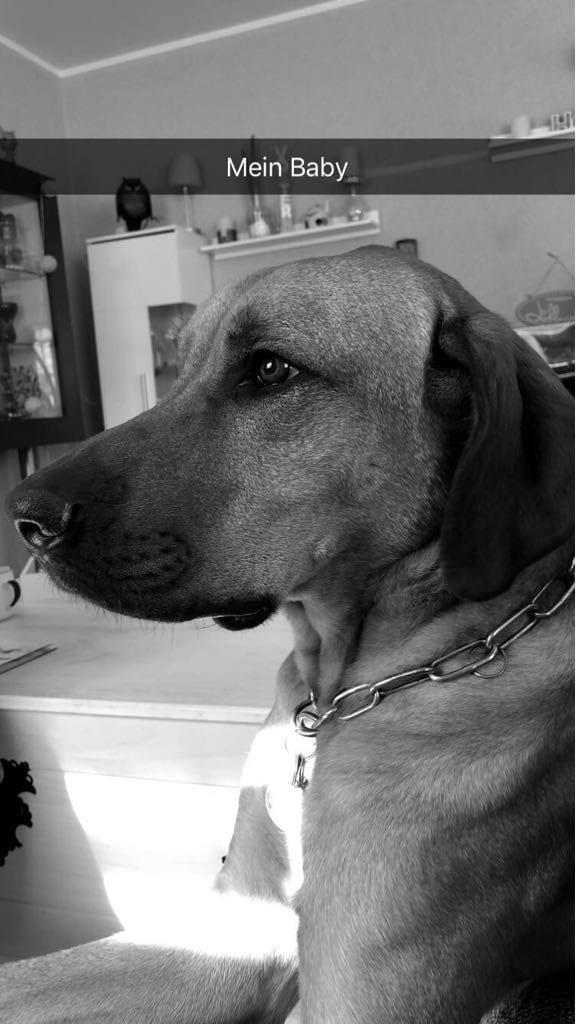 Hunde Foto: Sabine und Bruno - Ich höre nichts