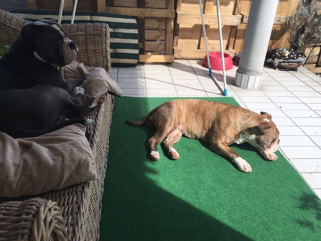 Hunde Foto: Claudia und Mystic Blue& Cinnemon - Sonnenanbeter