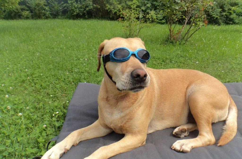 Hunde Foto: Michaela und Sasha – Summertime