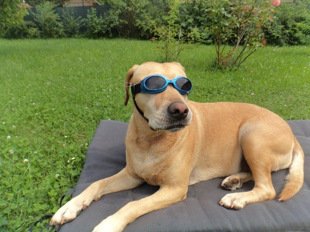 Hunde Foto: Michaela und Sasha - Summertime