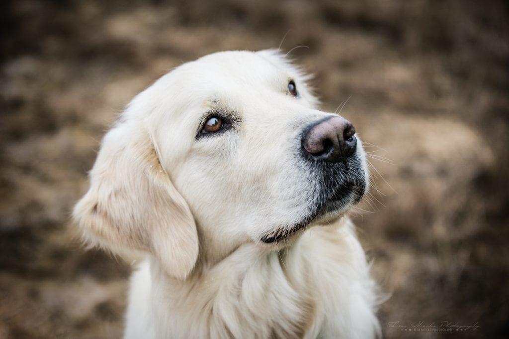 Hunde Foto: Kerstin und Iron Man - ob die bald fertig sind?