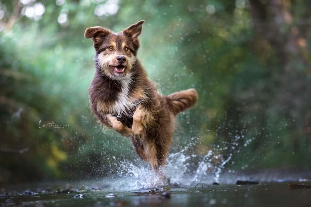 Hunde Foto: Gudrun und Cappo - Ich komme Frauchen!