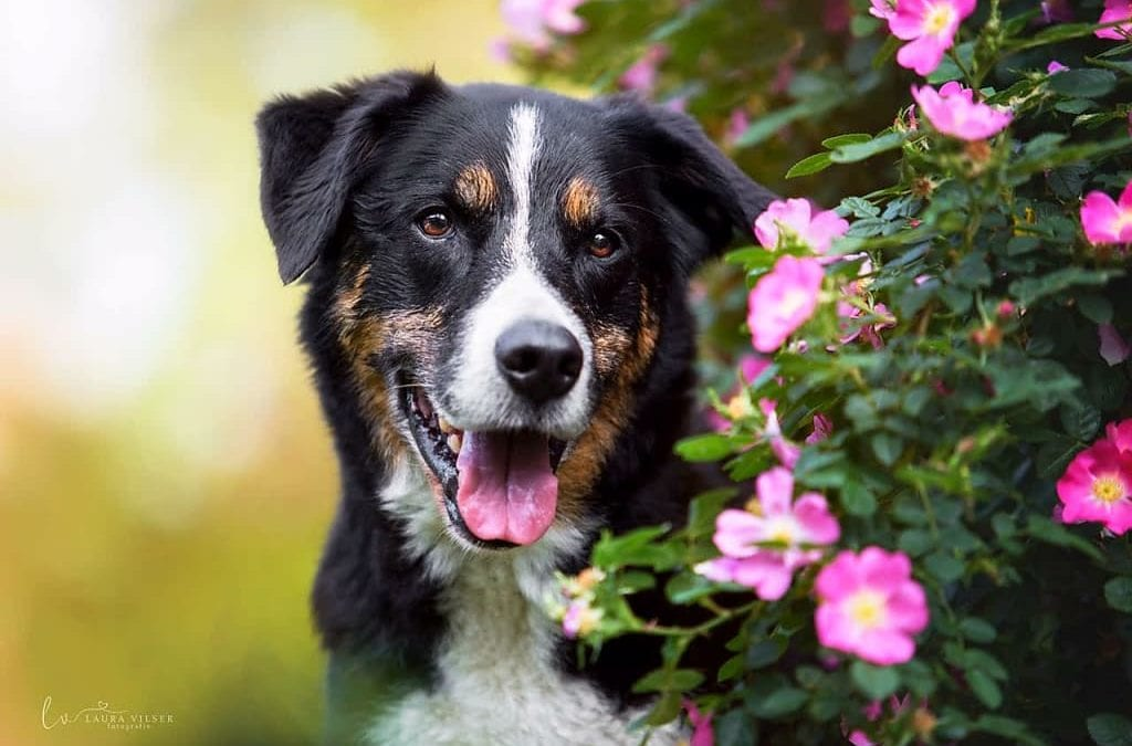 Hunde Foto: Gudrun und Gino – Lebensfreude pur am Lebensende