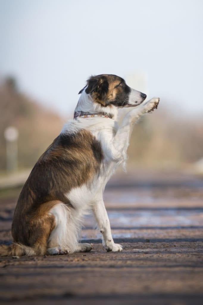 Hunde Foto: Michaela und Mayla - Winke winke