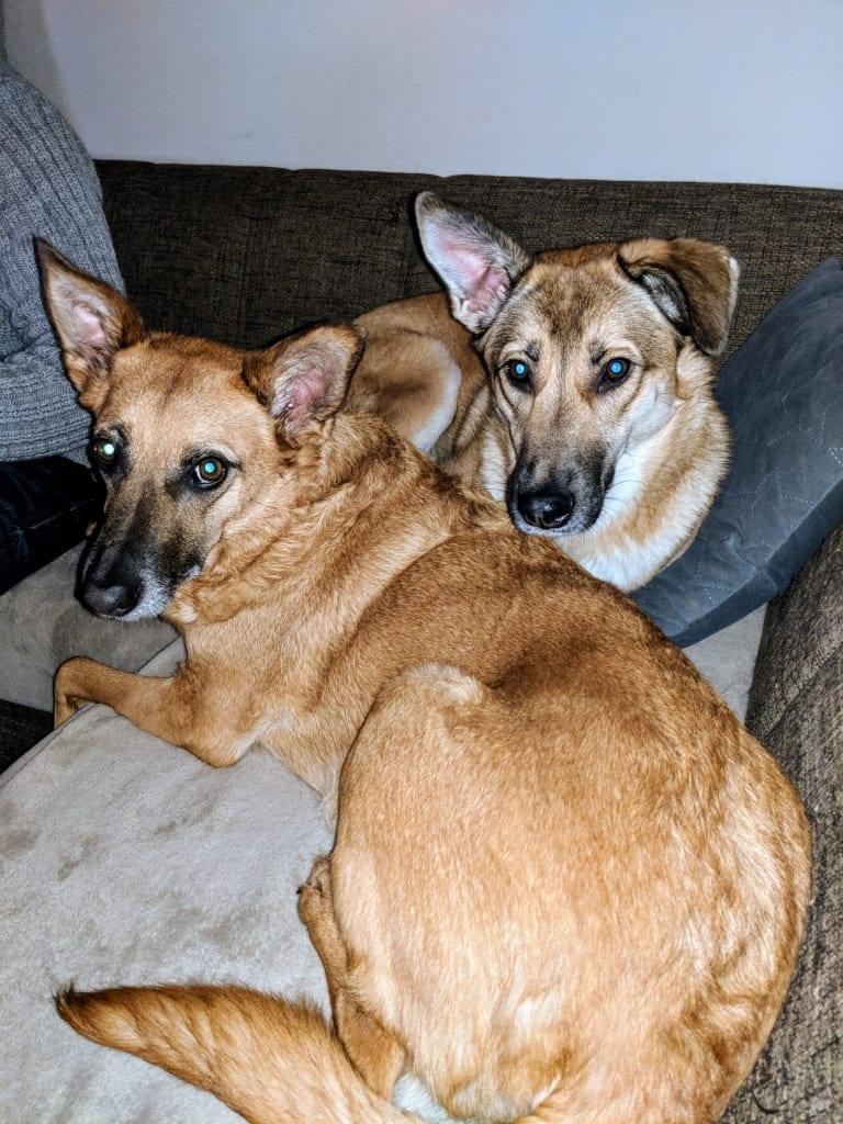 Hunde Foto: Nicole und Enya und Aika - Unzertrennlich