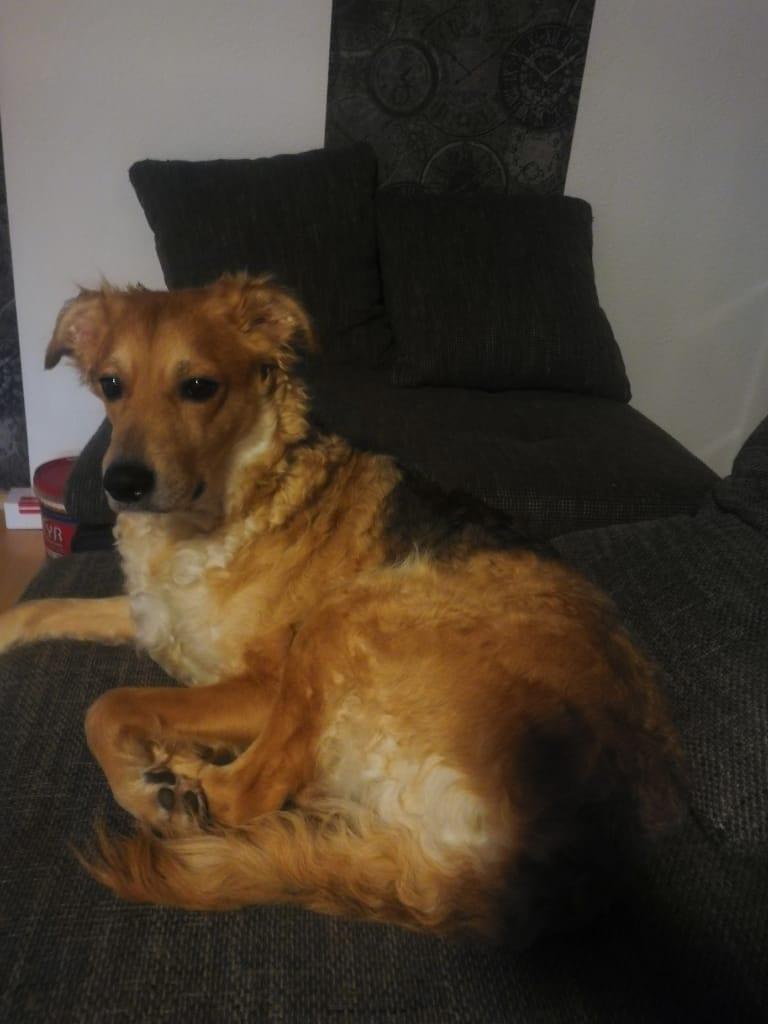 Hunde Foto: Franziska und Lucy - Was is da draußen?