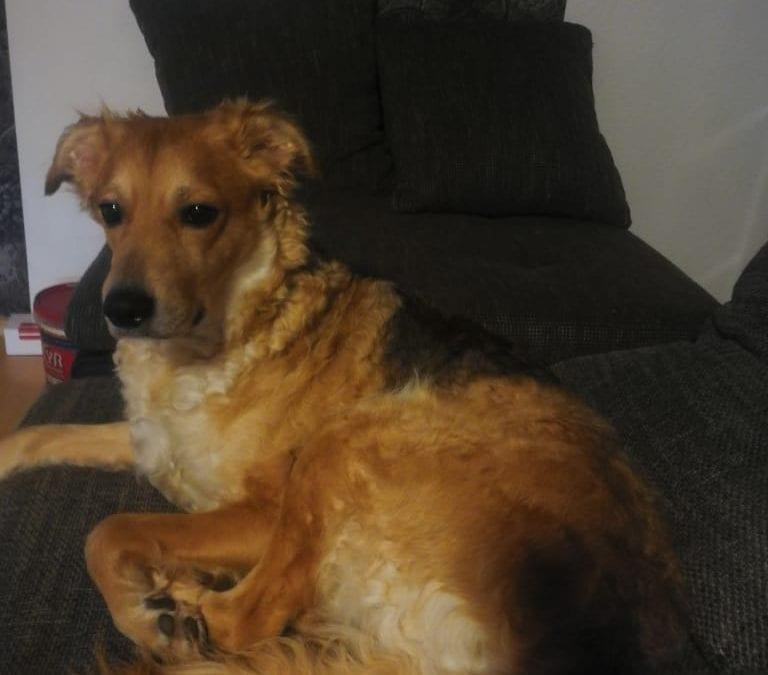 Hunde Foto: Franziska und Lucy – Was is da draußen?