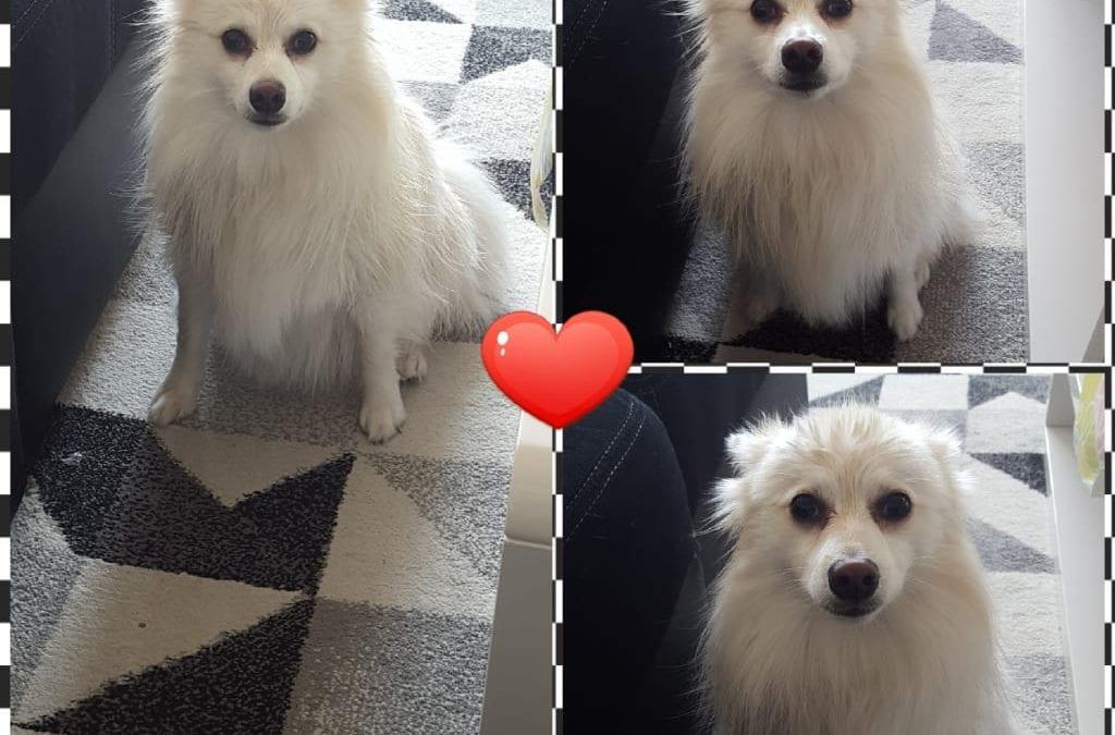 Hunde Foto: Kathleen und Mira – Frisch geduscht  ☺🐶