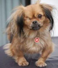 """Hunde Foto: Dagmar und """"Susi"""" - Meine kleine Ungarin"""