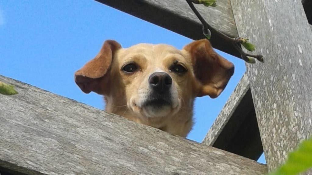 Hunde Foto: Eric und Candy – Neugierige Prinzessin