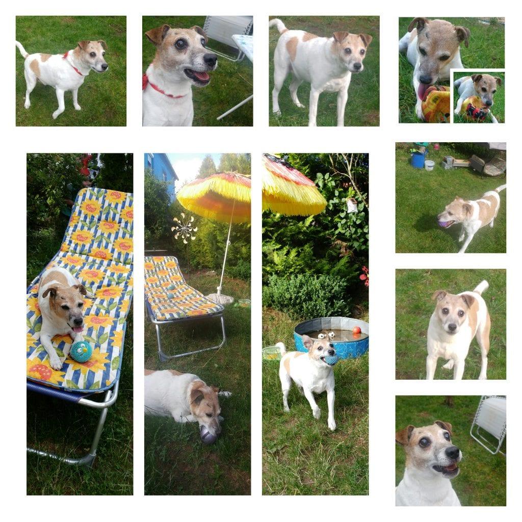 Hunde Foto: Marilena und Nicki - Spaß im Garten