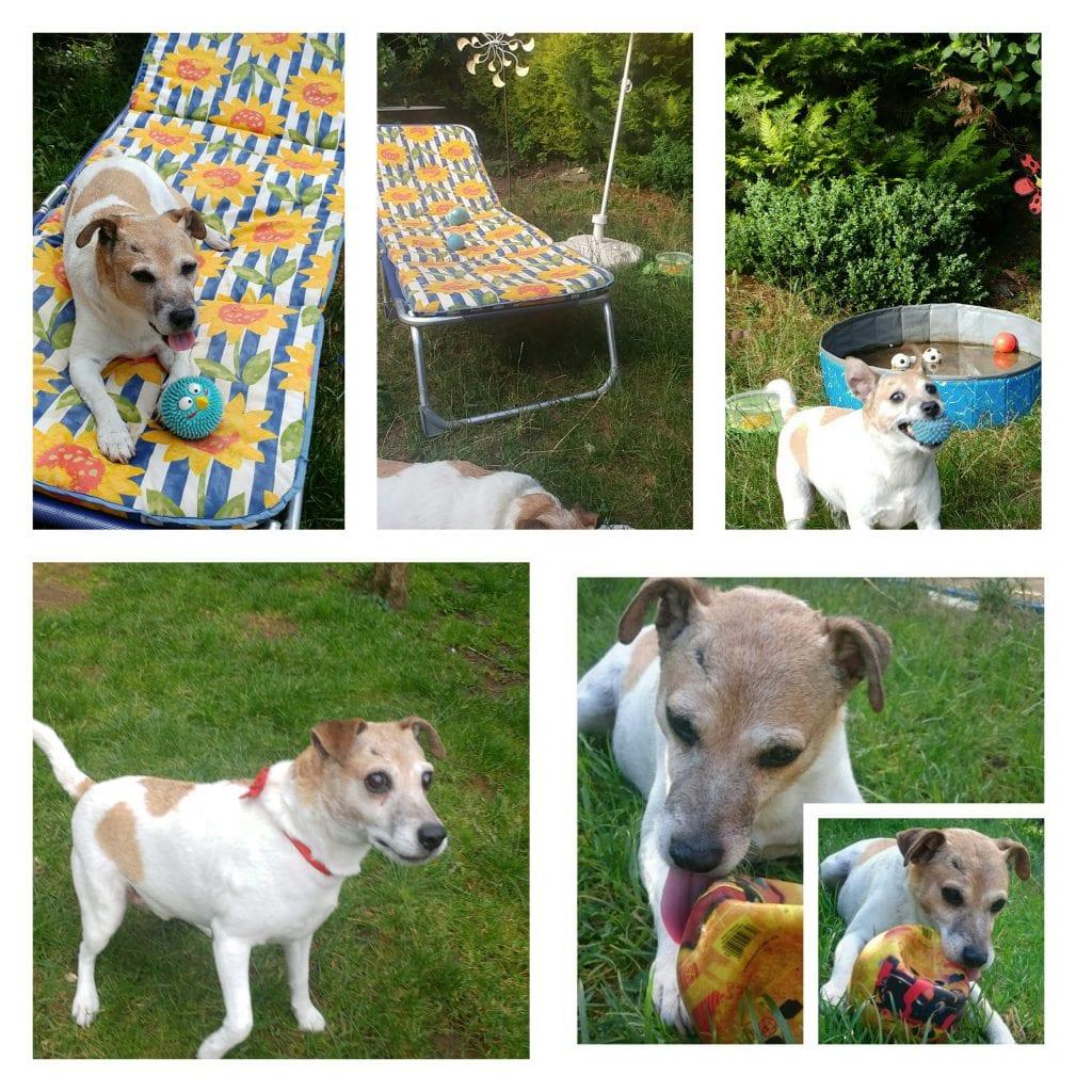 Hunde Foto: Marilena und Nicki - Wellness im Garten