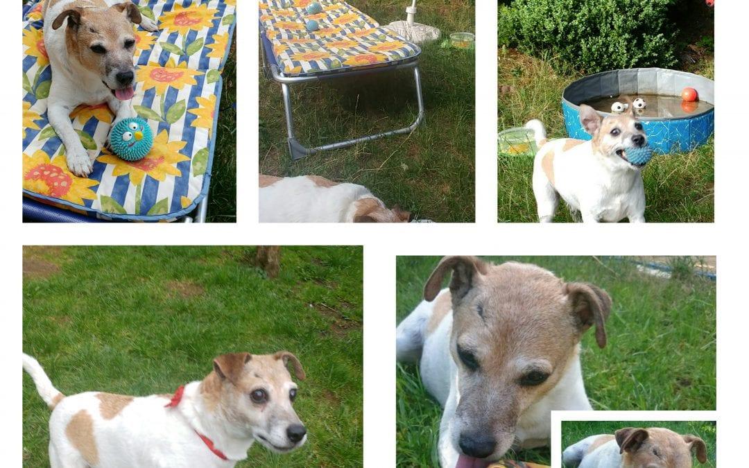 Hunde Foto: Marilena und Nicki – Wellness im Garten