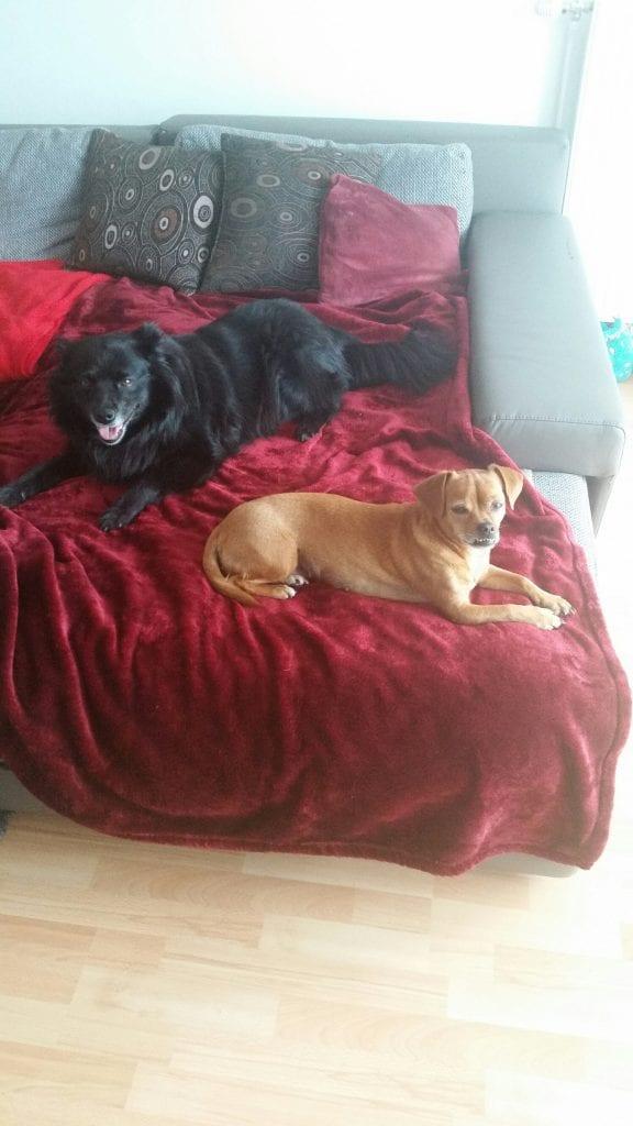 Meine hunde luna und aika beim kuscheln die ruhe vorm sturm