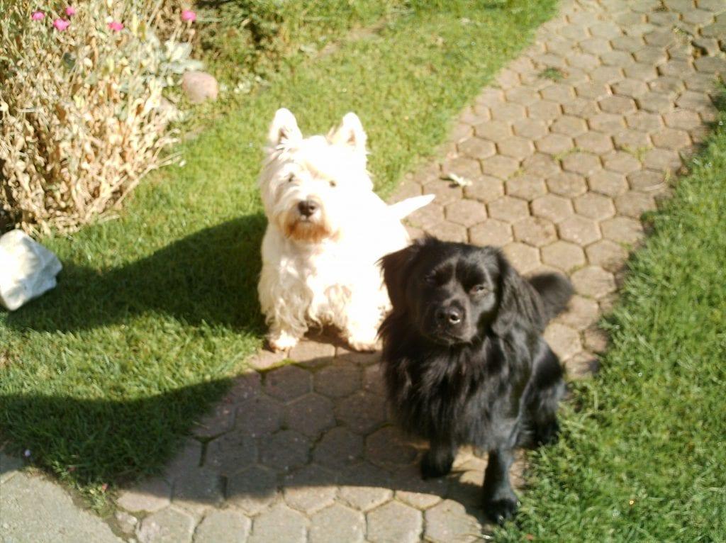 Bella und Lucky