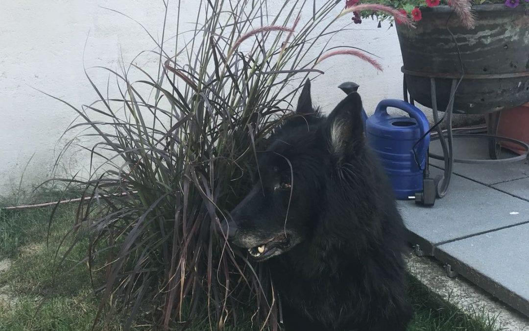 Hunde Foto: Sabine und Kira – Kira findet immer Schatten