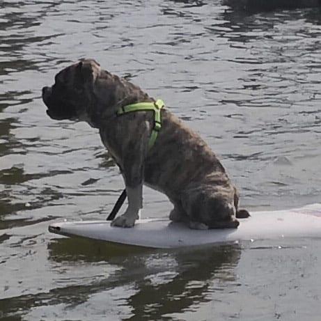 Udo, kleiner Surfer