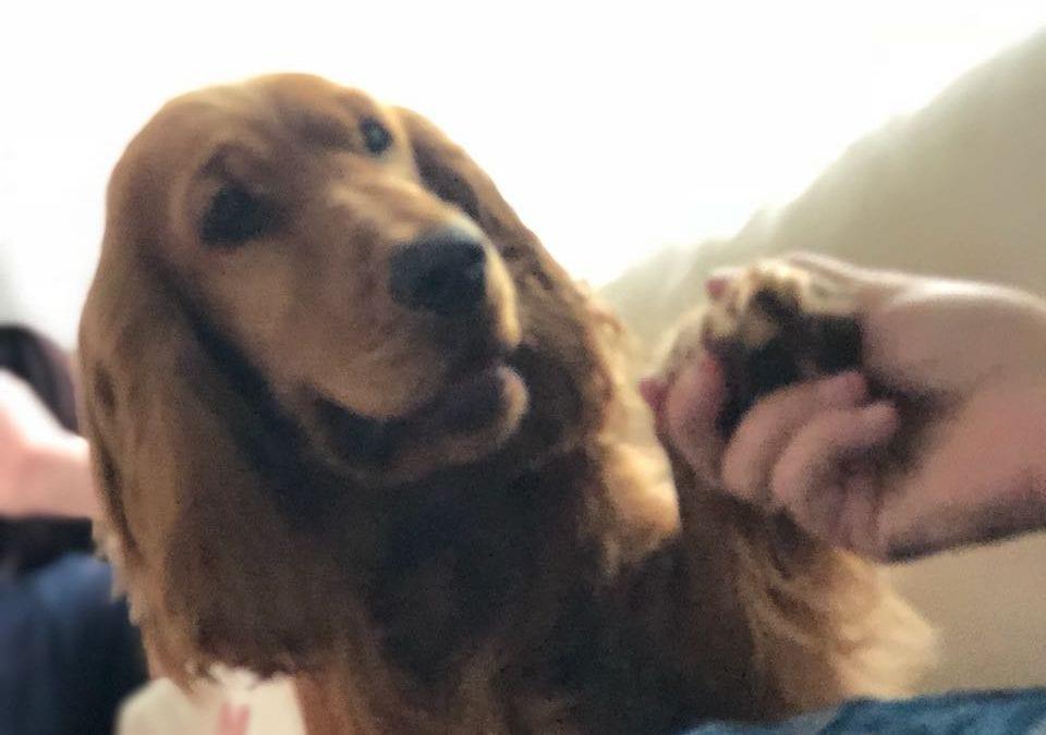 Hunde Foto: Sibylle und Cooper – Das letze Kind hat immer Fell 😃