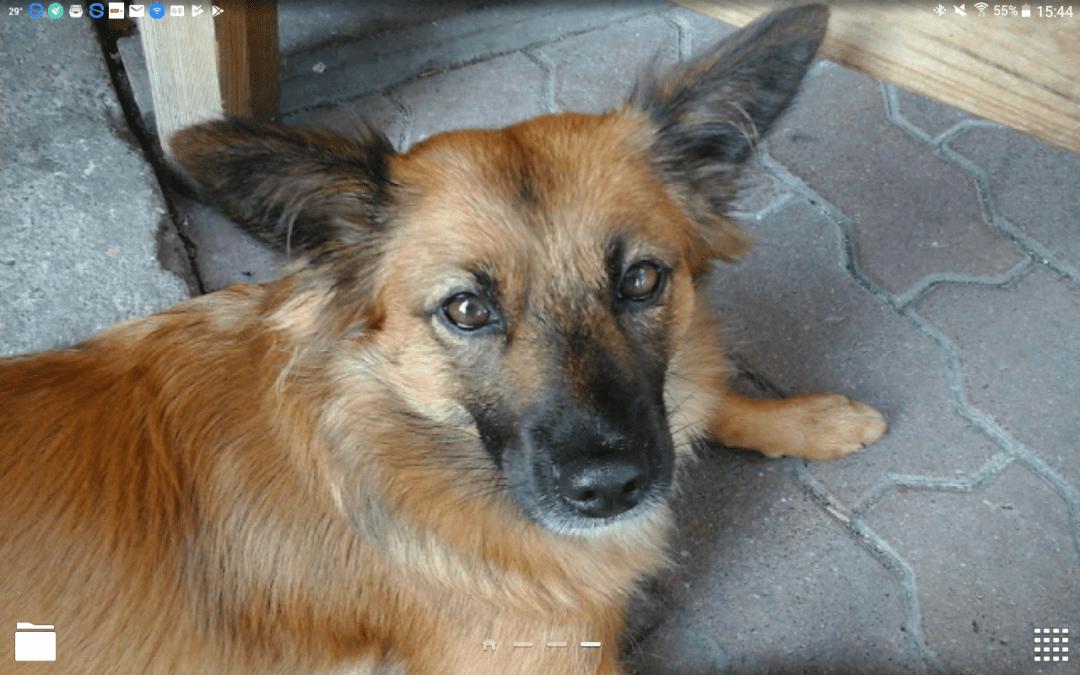 Hunde Foto: Ralf und LUNA – Meine Prinzessin, der beste Hnd der Welt, für Mich