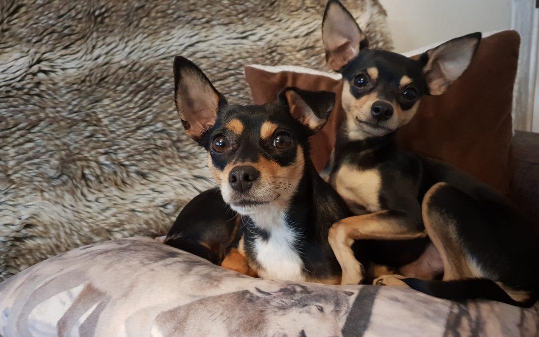 Hunde Foto: Yvonne und Sunny und Buddy – Zwei Herzen auf acht Pfoten 🐾🐾❤❤🐾🐾