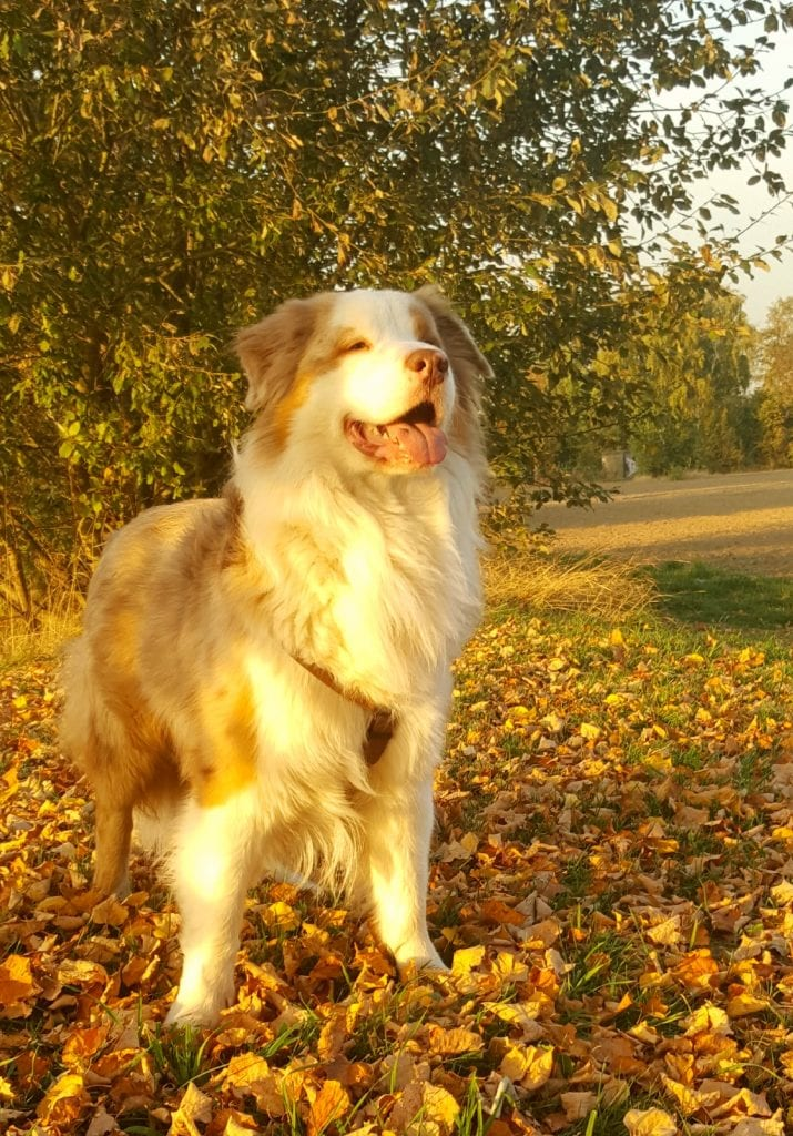 """Hunde Foto: Silvia und Yuma """"Stand by me"""" - Herbst"""