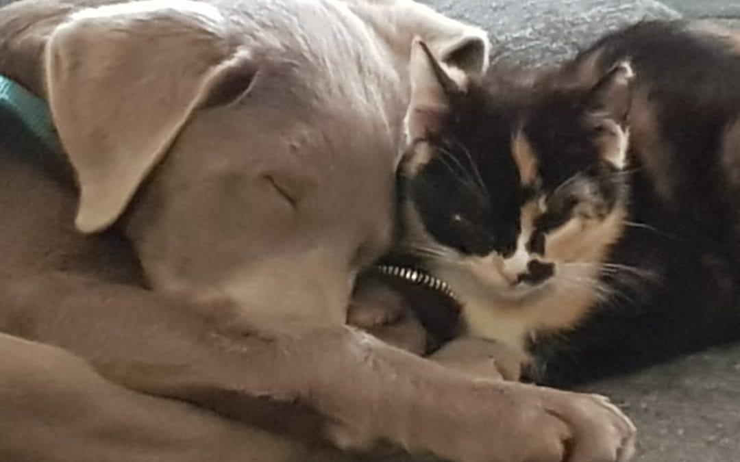 Hunde Foto: Antje und Gusion – Junge Liebe