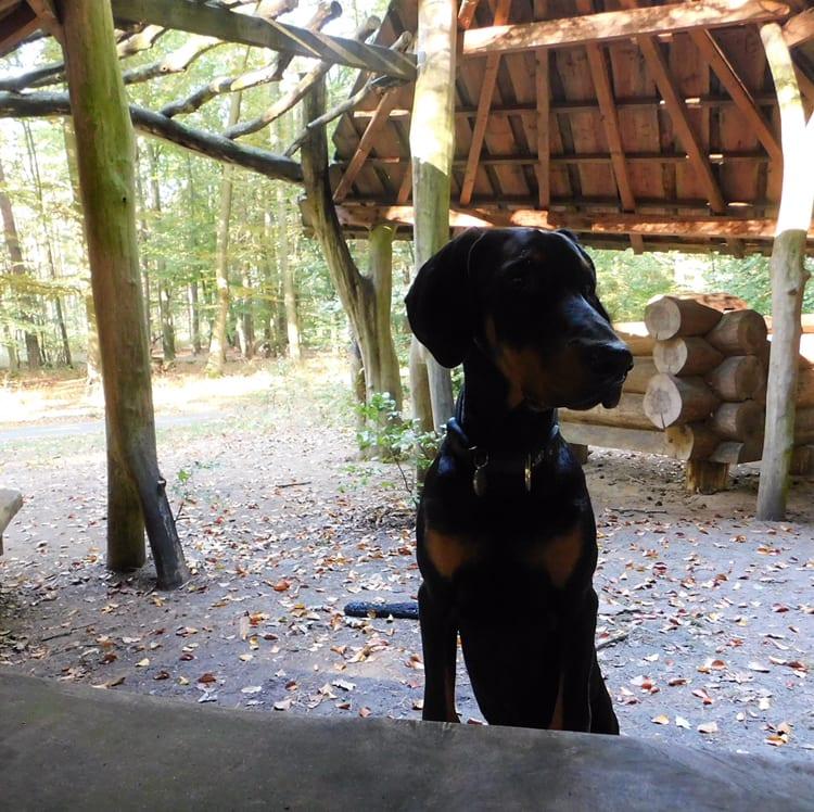 Hunde Foto: Heike und Floki - Waldausflug
