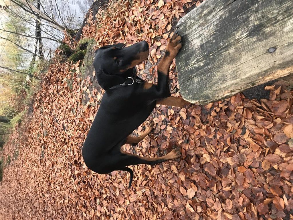 Hunde Foto: Heike und Floki - Floki