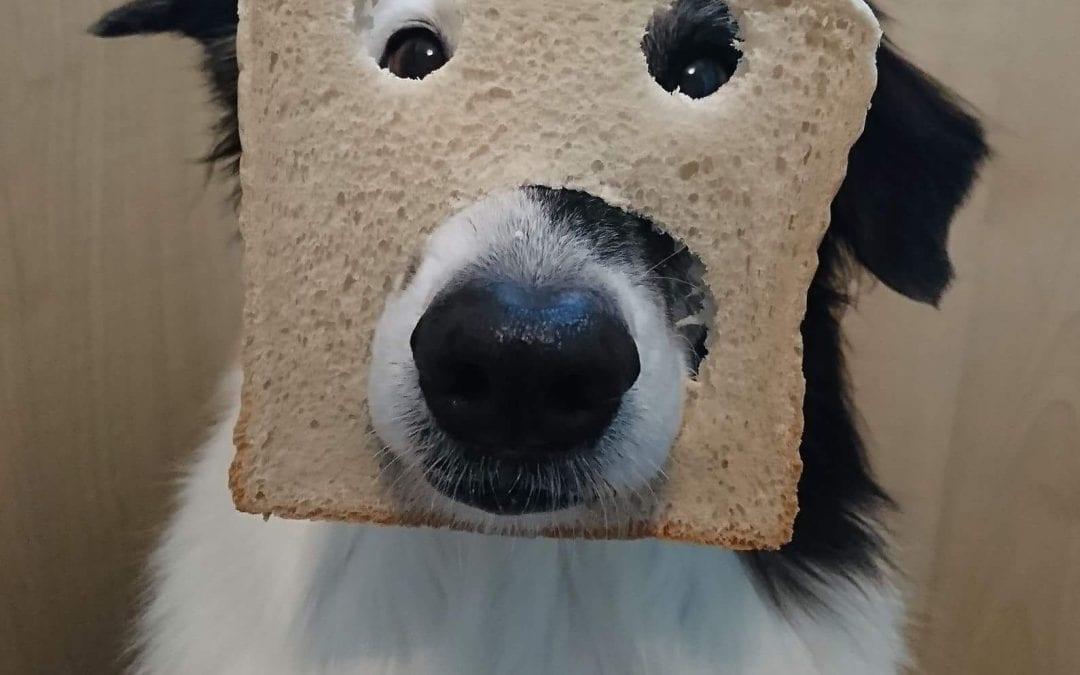 Hunde Foto: Nicole und Abby – Morgen bei uns, erstmal ein Toast