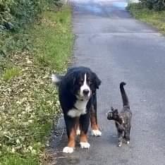 Hunde Foto: Andreas und Balou - Mit Hund und Katze Gassi gehen