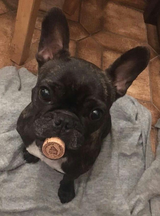 Hunde Foto: Sascha und Pebbles - Pebbles unser Barkeeper