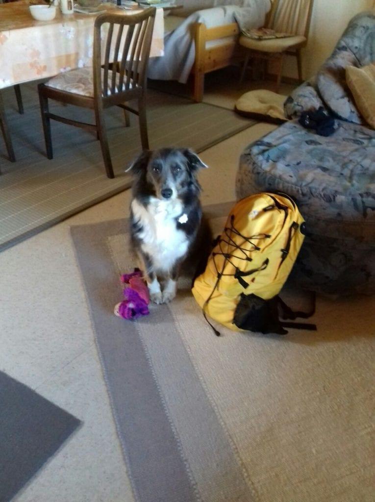 Hunde Foto: Nadine und Bailey - Los beeil dich ich will los