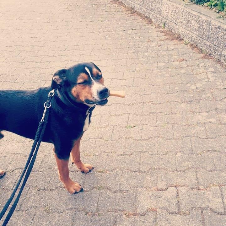 Hunde Foto: Franziska und Rocko - Egal was Hauptsache Essen