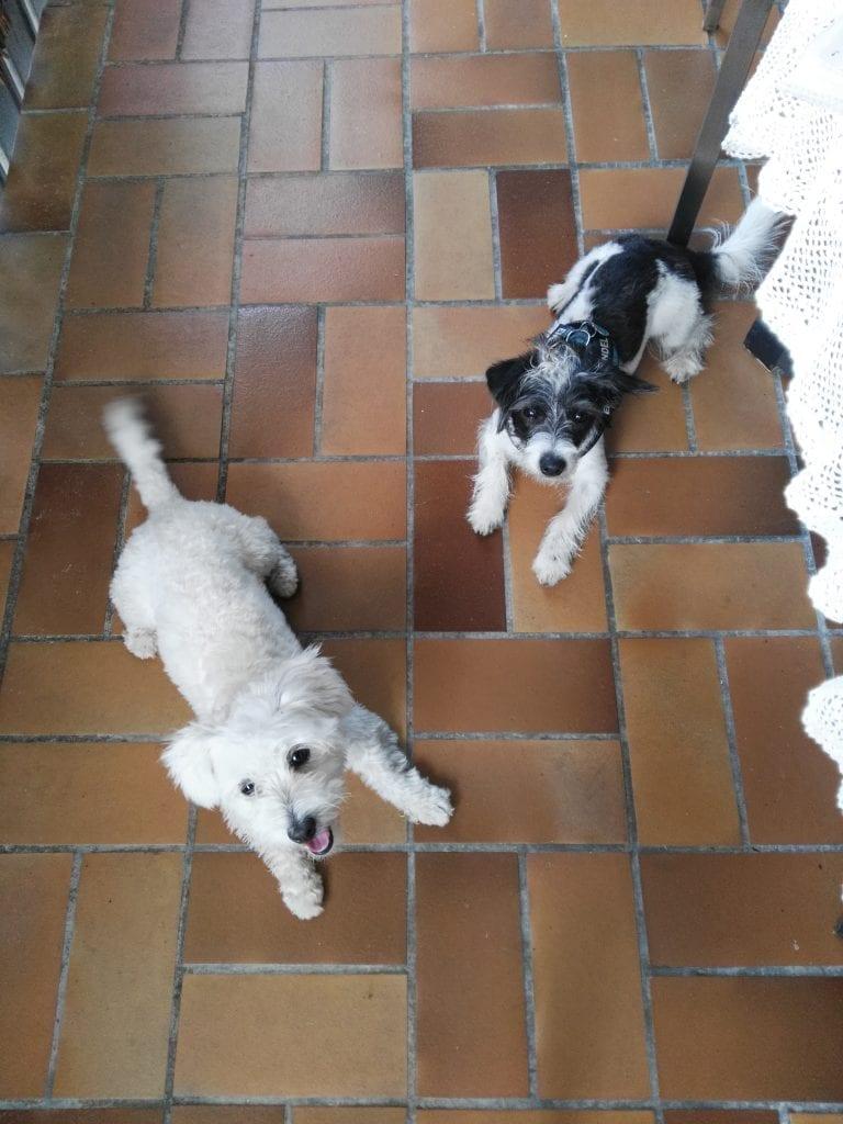 Hunde Foto: Petra und Bobby - Beste freunde