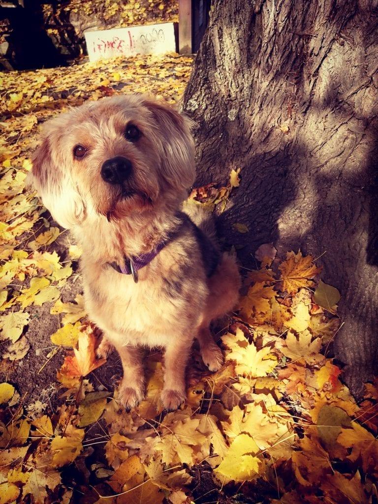 Hunde Foto: Jasmine und Malik - Der goldene Herbst ❣️😍