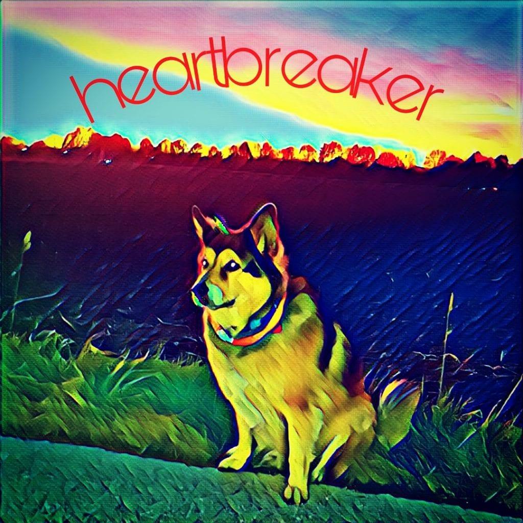 Hunde Foto: Micha und Mogli - heartbreaker
