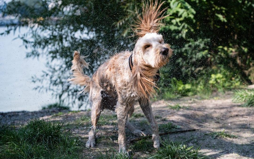 Hunde Foto: Thomas und Ilvy – Mal richtig Durchschütteln!
